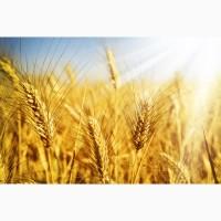 Продам действующие Агропредприятия 3800га Колхоз, Полтавская