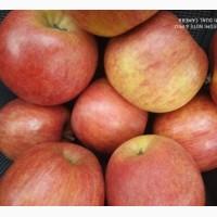 Продам яблука з холодильника, високої якості, різних сортів