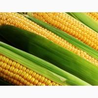 Гербіцид для кукурудзи