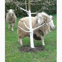 Продам барани овечки 7мес