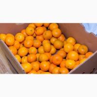 Продам цитрусовые апельсин мандарин лимон грейпфрут