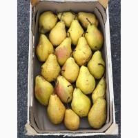 Продам груши сорта Ноябрьская