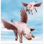 Корм Протеиновая Бомба - для свиней и рыб.Тесто, в котором 3 масла: не покажется мало
