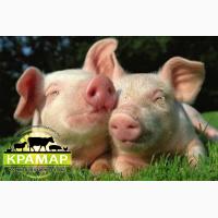 Белково-витаминно-минеральные добавки для свиней (БМВД)