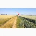 Продам посевной материал канадской пшеницы TESLA. ЦЕНА СНИЖЕНА