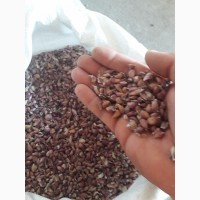 Воздушка семена чеснока любаша производитель.консультация