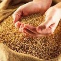 Постійно Купуємо пшеницю