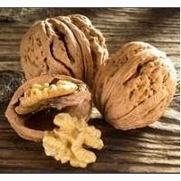 Предприятие закупает орех грецкий в скорлупе