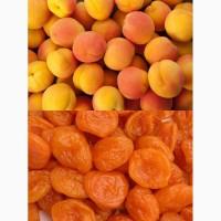 Продам абрикосу свежую и сухую из Турции