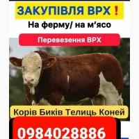 Закупівля врх коней на м#039;ясо та корів на утримання