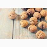 Продаем целый грецкий орех 2016