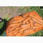 Продажа моркови 2 сорта для переработки оптом и крупным оптом
