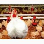 Продам птице ферму Одесса