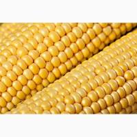 Закупляємо кукурудзу