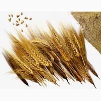 Покупаем отруби пушистые пшеничные, ржаные, зерноотходы