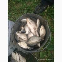 Продам рибу(карась)