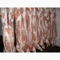 Продам полутушу обрезную свинина опт