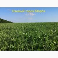 Семена гороха озимого Мороз 2-реп. (Сербия)