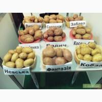 Семенной картофель ранний (элита)