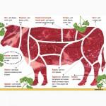 Купим говядину в полутушах