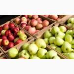 Продаємо красиві та смачні яблука з холодильника власного виробництва