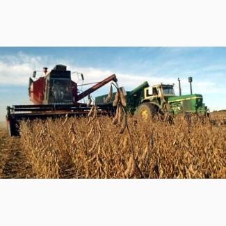 Купим Сою с ГМО и без.Есть самовывоз