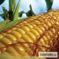 Кукуруза ВН 6763