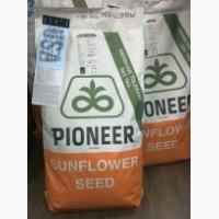 Семена подсолнечника Пионер (PIONEER) P64LE25 (П64ЛЕ25)