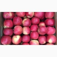 Продаємо яблуко оптом та в роздріб від виробника. Якість 100 %! м.Вінниця