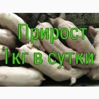 Поросята со свинокомплекса большими партиями
