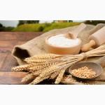 Мукомольное предприятие ЄВРОМЛИН предлагает к реализации пшеничную муку Высшего сорта
