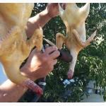 Мясо домашней утки