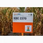 Продам гібрид кукурузи КВС 2370