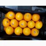 Продаю апельсин