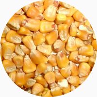 Оптом кукурузу любого качества