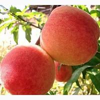 Персик опт не дорого