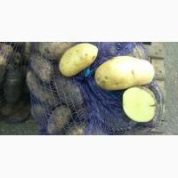 Насіннєва картопля: Гранада (Granada)