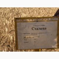 Пшеница Сталева семена озимой пшеницы