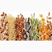 Куплю масличные дорого