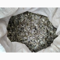 Продаю насіння гарбуза голонасіневого