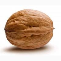 Грецкий орех для боя 2020
