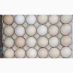 Яйце столове куряче