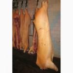 Напівтуші свинячі (обрізні, в шкірі, обсмалені)