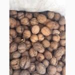 Продам бойный грецкий орех