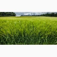Закупка зерновых культур (ячмень, пшеница, кукуруза)