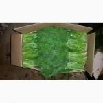 Зелень оптом укроп, петрушка, кинза, шпинат из Узбекистана