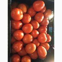 ТОМАТ СЛИВКА Сорт Канилес. Томат оптом от Производителя. Испанский томат сливка