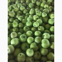 Високоякісні яблука оптом від виробника. Приємні ціни. Асортимент в наявності