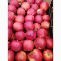 Продам яблука Чорний Принц (Йонапринц)