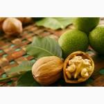 Предлагаем поставки ядра ореха грецкого кондитерским фабрикам
